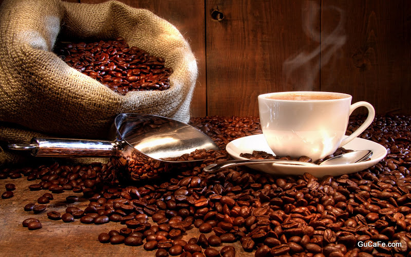 16842-coffee-and-coffee-beans-close-up